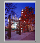 The brightly lit trees of the Salt Lake Temple grounds beckon visitors to enter and celebrate the Christmas season.