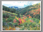 Fall colors light up the hillsides of Toll Canyon in the Wasatch Cache National Forest, Utah.